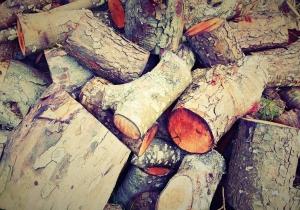 Výhřevnost dřeva osika