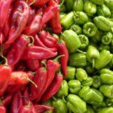 Pěstování paprik: Od výsevu až po sklizeň